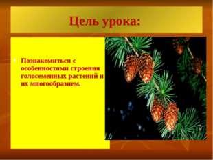 Цель урока: Познакомиться с особенностями строения голосеменных растений и их