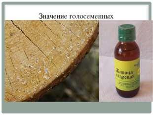 Значение голосеменных Из древесины хвойных изготавливают мебель, бумагу; её и