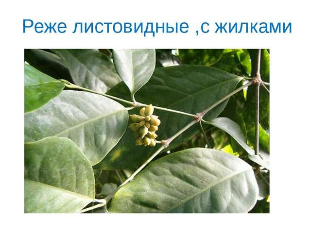 Реже листовидные ,с жилками