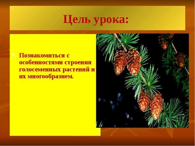 Цель урока: Познакомиться с особенностями строения голосеменных растений и их...