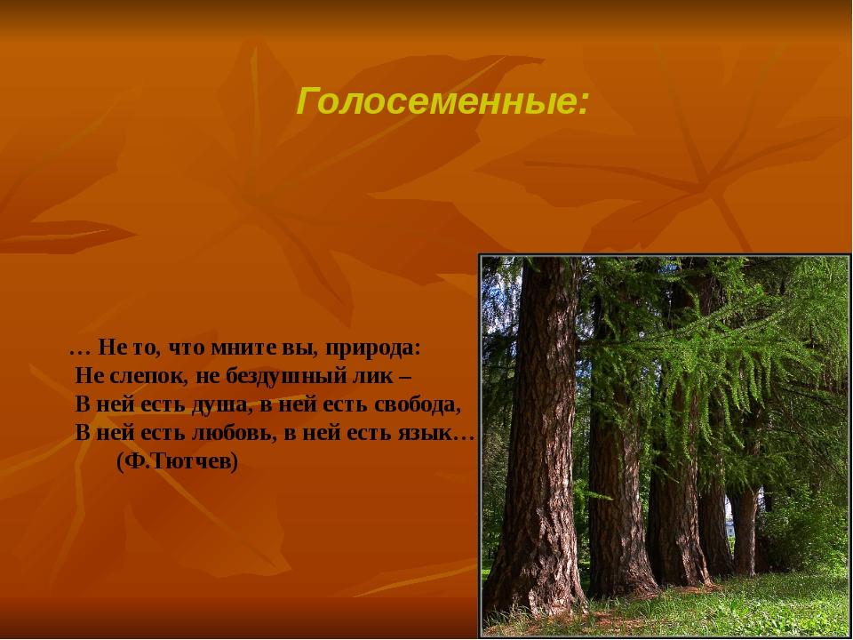 Голосеменные: … Не то, что мните вы, природа: Не слепок, не бездушный лик – В...