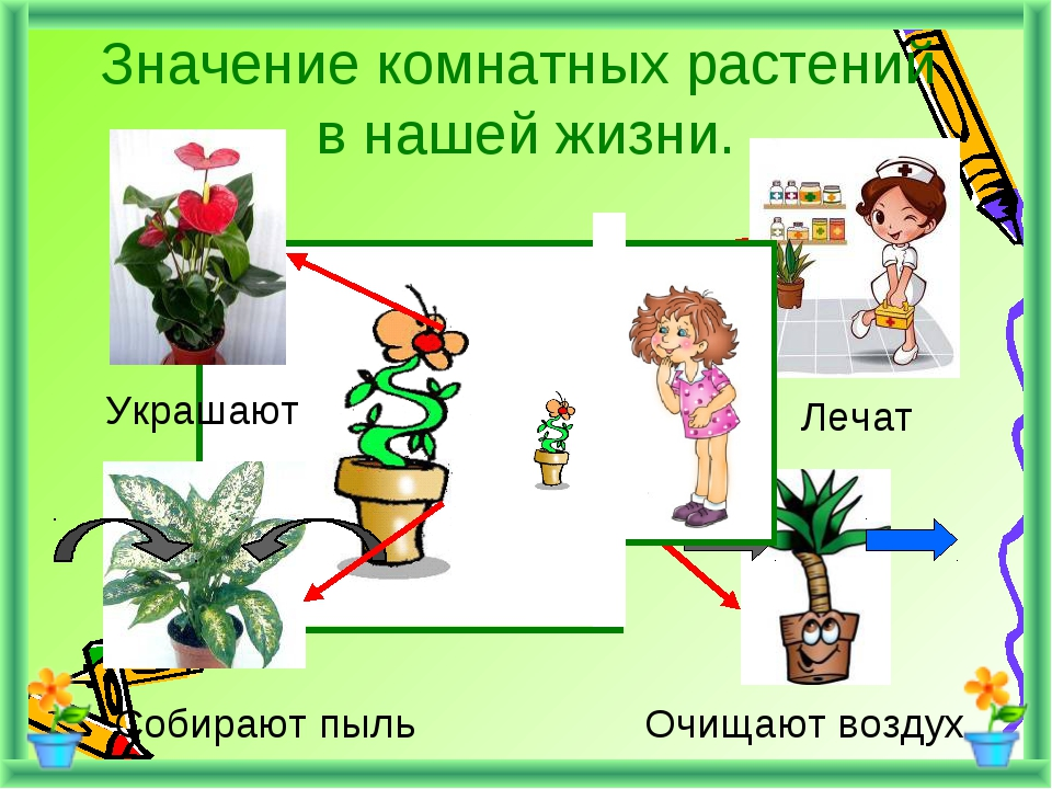 Значение комнатных растений в нашей жизни. Украшают Лечат Собирают пыль Очища...
