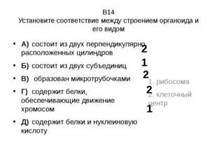 В14 Установите соответствие между строением органоида и его видом А)состоит