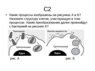 С2 Какие процессы изображены на рисунках А и Б? Назовите структуру клетки, уч