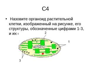 С4 Назовите органоид растительной клетки, изображенный на рисунке, его структ