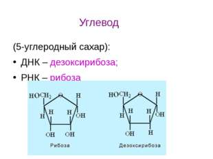 (5-углеродный сахар): ДНК – дезоксирибоза; РНК – рибоза Углевод
