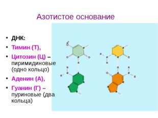 ДНК: Тимин (Т), Цитозин (Ц) – пиримидиновые (одно кольцо) Аденин (А), Гуанин