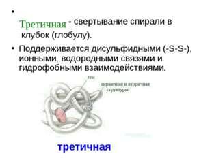 - свертывание спирали в клубок (глобулу). Поддерживается дисульфидными