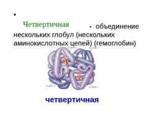 - объединение нескольких глобул (нескольких аминокислотных цепей) (гемоглоби