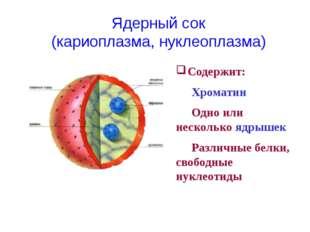 Содержит: Хроматин Одно или несколько ядрышек Различные белки, свободные н