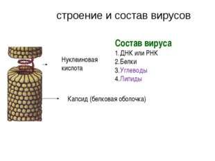 Капсид (белковая оболочка) Нуклеиновая кислота Состав вируса ДНК или РНК Белк