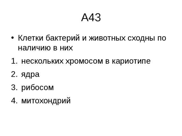 А43 Клетки бактерий и животных сходны по наличию в них нескольких хромосом в...