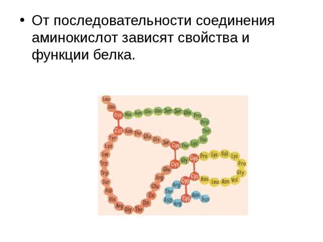 От последовательности соединения аминокислот зависят свойства и функции белка.