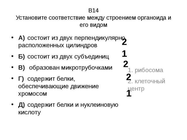 В14 Установите соответствие между строением органоида и его видом А)состоит...