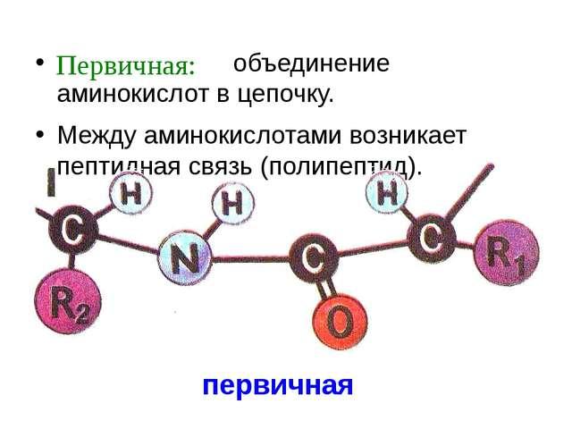 первичная объединение аминокислот в цепочку. Между аминокислотами возникает п...