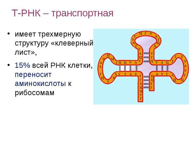 имеет трехмерную структуру «клеверный лист», 15% всей РНК клетки, переносит...