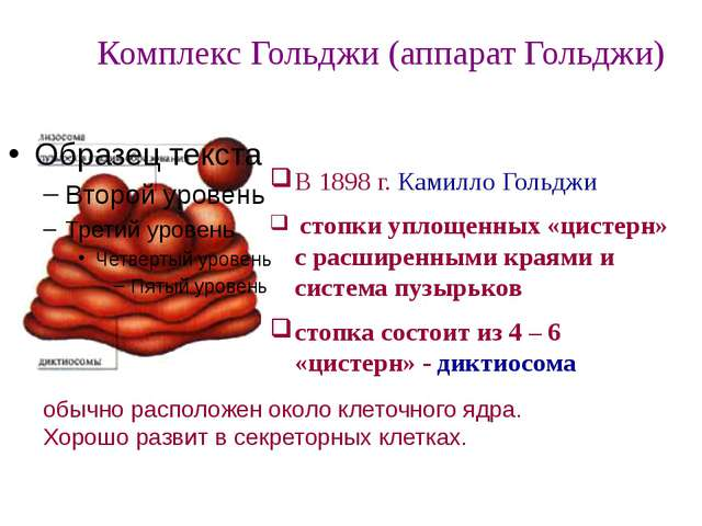 В 1898 г. Камилло Гольджи стопки уплощенных «цистерн» с расширенными кр...