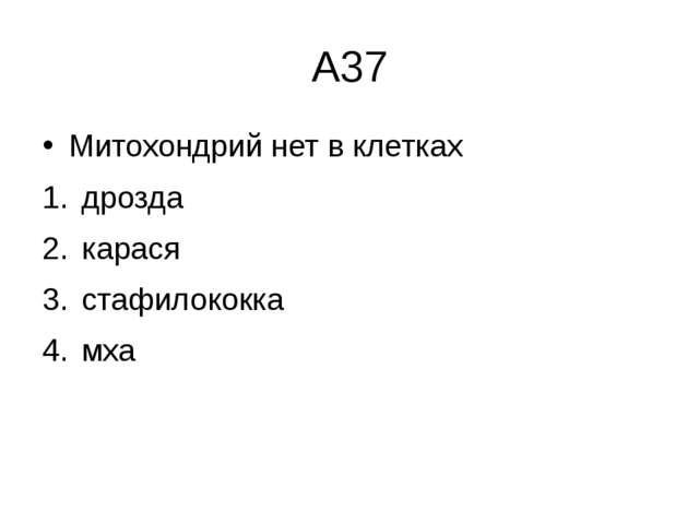 А37 Митохондрий нет в клетках дрозда  карася  стафилококка  мха