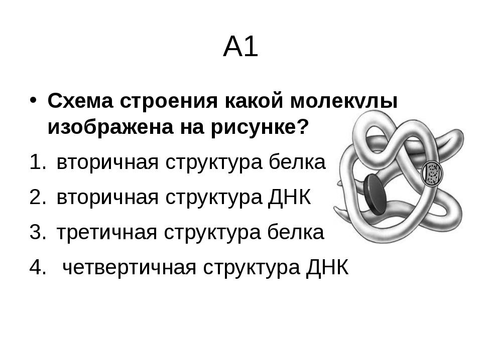 А1 Схема строения какой молекулы изображена на рисунке? вторичная структура б...