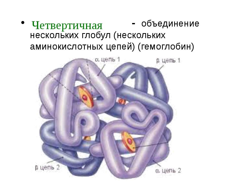 - объединение нескольких глобул (нескольких аминокислотных цепей) (гемоглоби...
