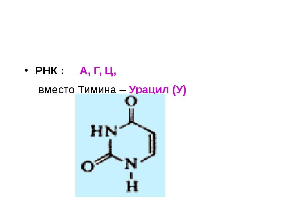 РНК : А, Г, Ц, вместо Тимина – Урацил (У)