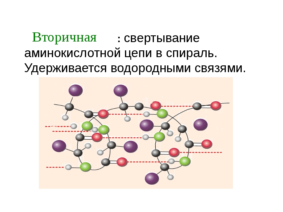 : свертывание аминокислотной цепи в спираль. Удерживается водородными связям...