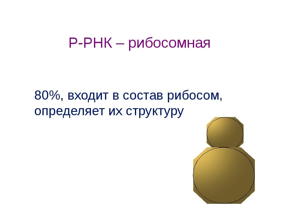 80%, входит в состав рибосом, определяет их структуру Р-РНК – рибосомная