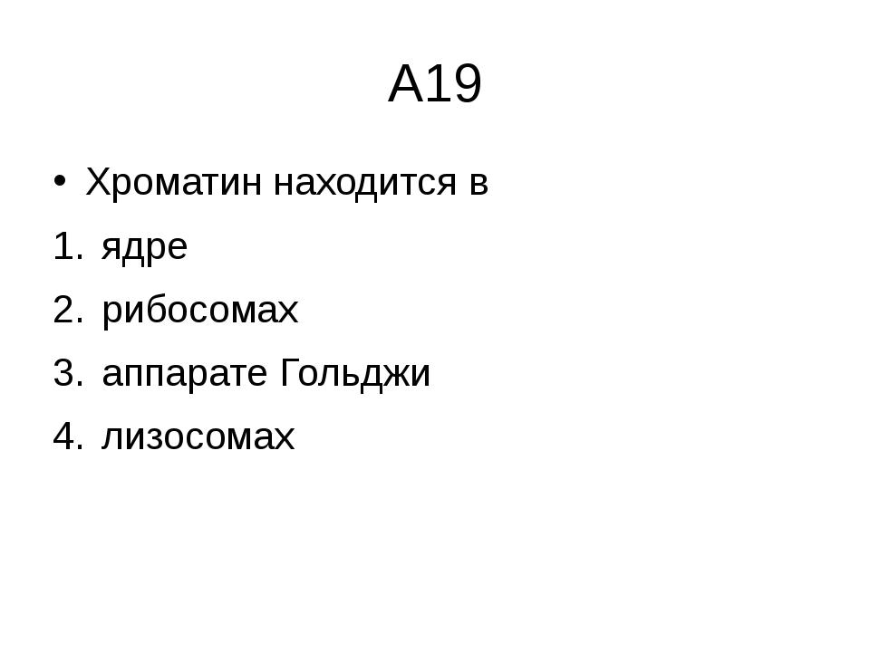А19 Хроматин находится в ядре  рибосомах  аппарате Гольджи  лизосомах