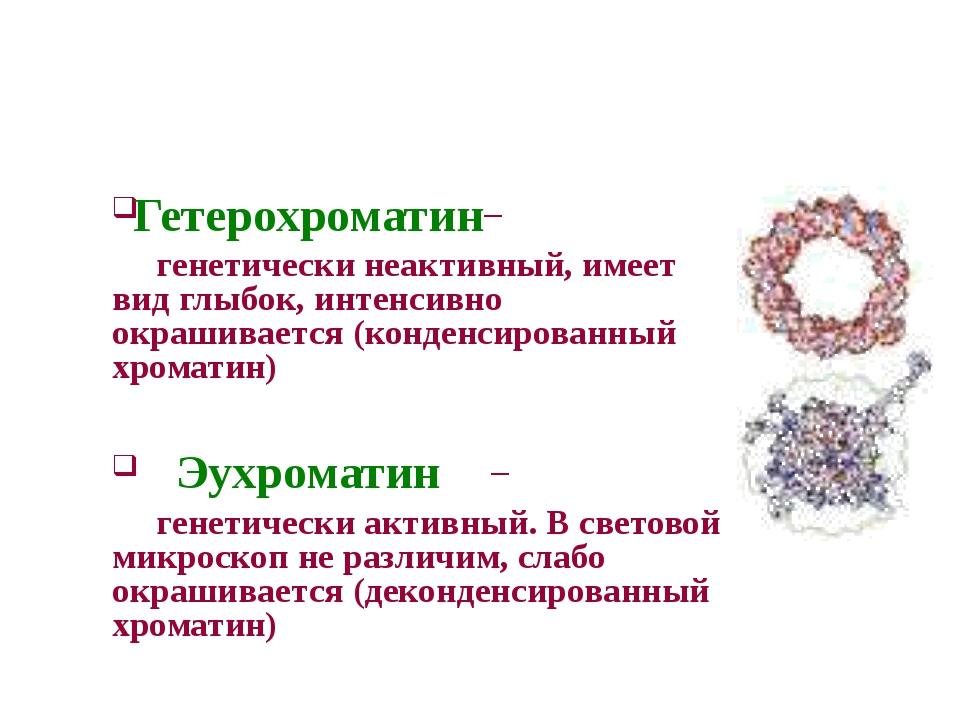 – генетически неактивный, имеет вид глыбок, интенсивно окрашивается (конден...