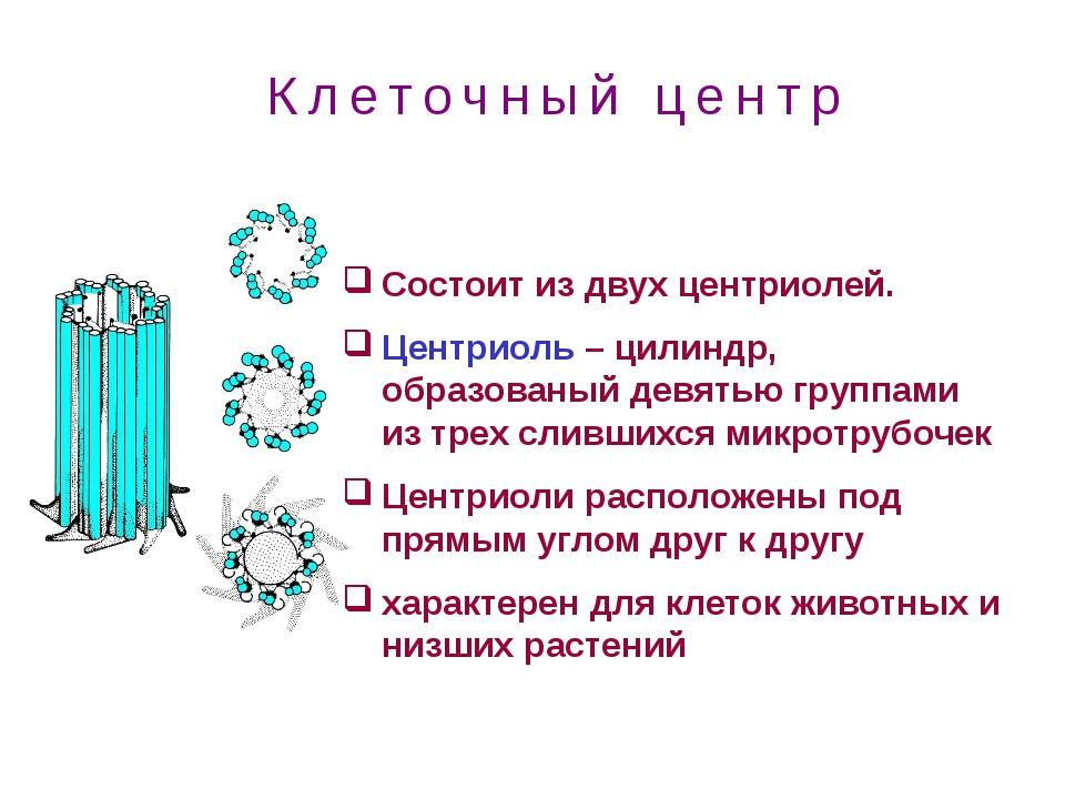 Состоит из двух центриолей. Центриоль – цилиндр, образованый девятью группами...