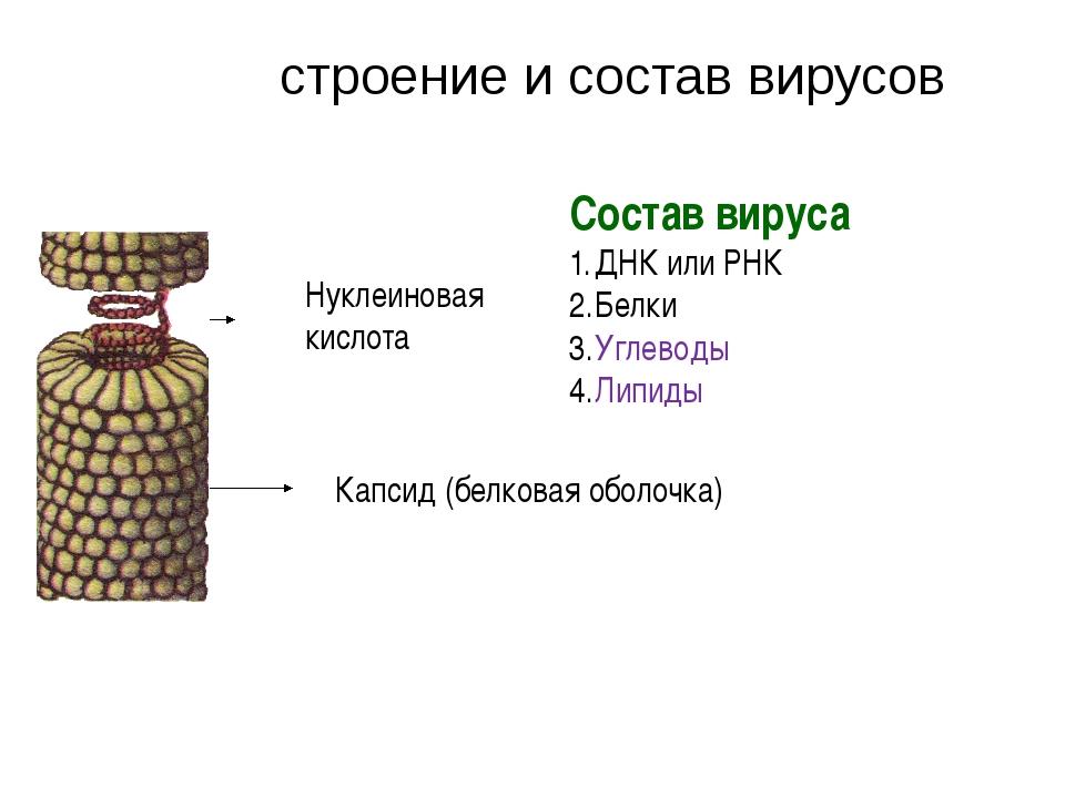 Капсид (белковая оболочка) Нуклеиновая кислота Состав вируса ДНК или РНК Белк...