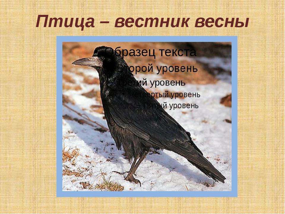 Птица – вестник весны