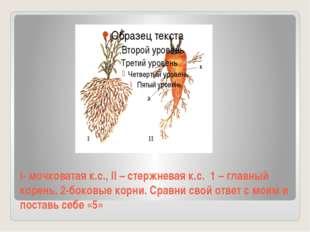 I- мочковатая к.с., II – стержневая к.с. 1 – главный корень, 2-боковые корни.