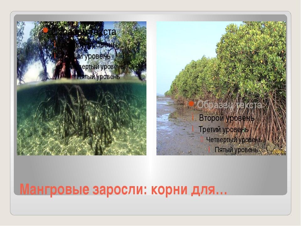 Мангровые заросли: корни для…