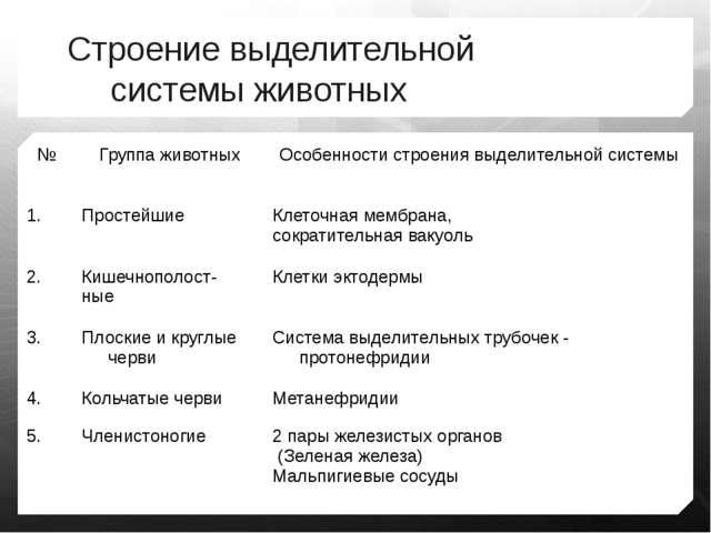 Строение выделительной системы животных № Группа животных Особенности строени...