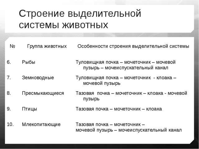 Презентация на тему Эволюция выделительной системы животных  Строение выделительной системы животных № Группа животных Особенности строени