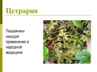 Цетрария Лишайники находят применение в народной медицине