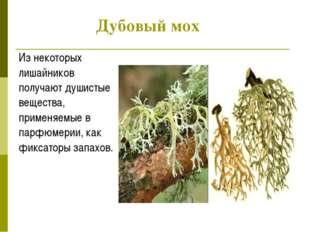 Дубовый мох Из некоторых лишайников получают душистые вещества, применяемые