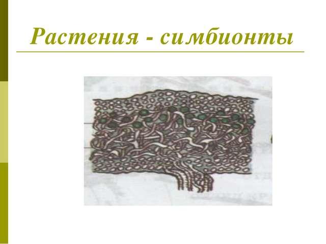 Растения - симбионты