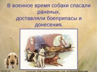 В военное время собаки спасали раненых, доставляли боеприпасы и донесения. c