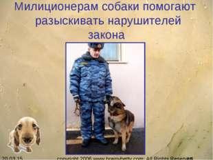 Милиционерам собаки помогают разыскивать нарушителей закона copyright 2006 ww