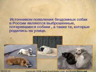 Источником появления бездомных собак в России являются выброшенные, потерявш