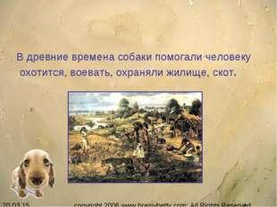 В древние времена собаки помогали человеку охотится, воевать, охраняли жилище