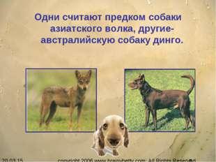 Одни считают предком собаки азиатского волка, другие- австралийскую собаку ди