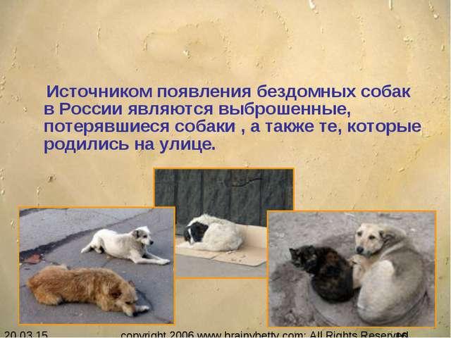 Источником появления бездомных собак в России являются выброшенные, потерявш...