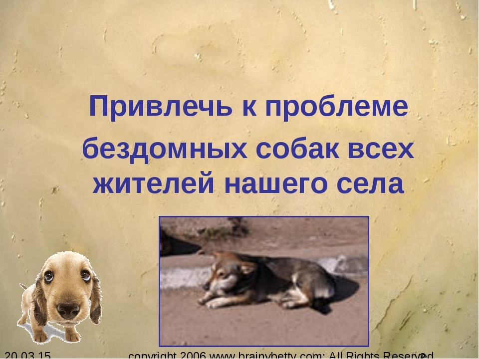 Привлечь к проблеме бездомных собак всех жителей нашего села copyright 2006...