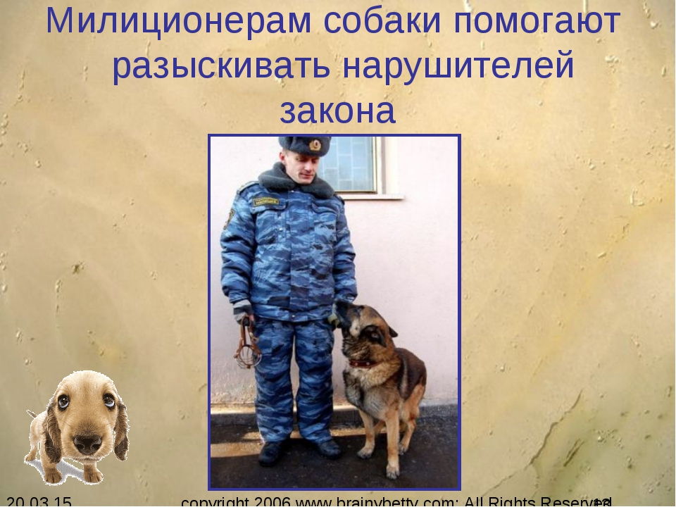 Милиционерам собаки помогают разыскивать нарушителей закона copyright 2006 ww...