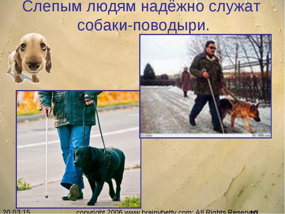 Слепым людям надёжно служат собаки-поводыри. copyright 2006 www.brainybetty.c...