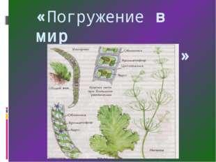 «Погружение в мир водорослей»