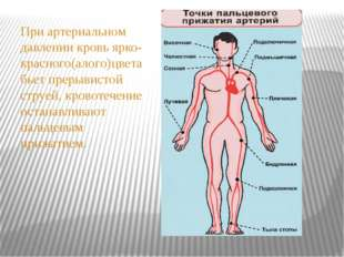 При артериальном давлении кровь ярко-красного(алого)цвета бьет прерывистой ст